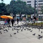 Pigeons everywhere at Catalunya square.