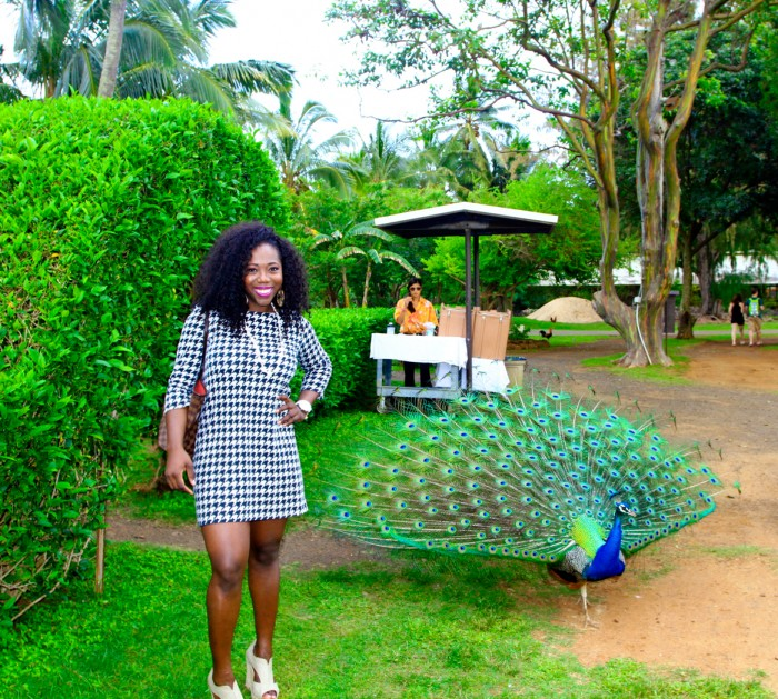 I photo-bombed the peacock at Smith's tropical luau in Kauaʻi
