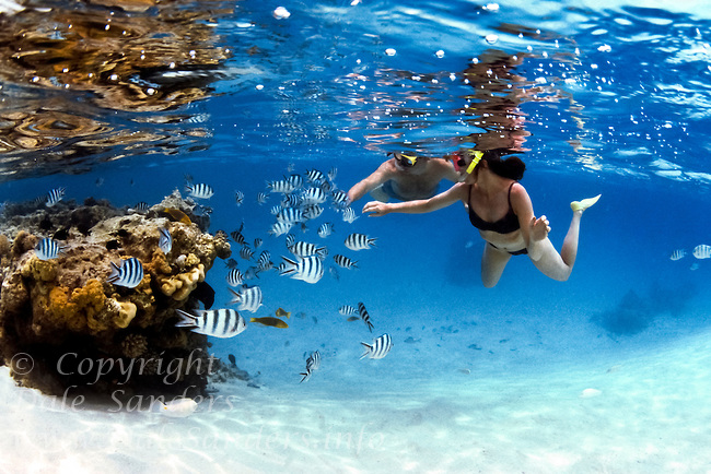 Snorkelers, schools of fish and Coral Reef. Aitutaki Lagoon, Cook Islands