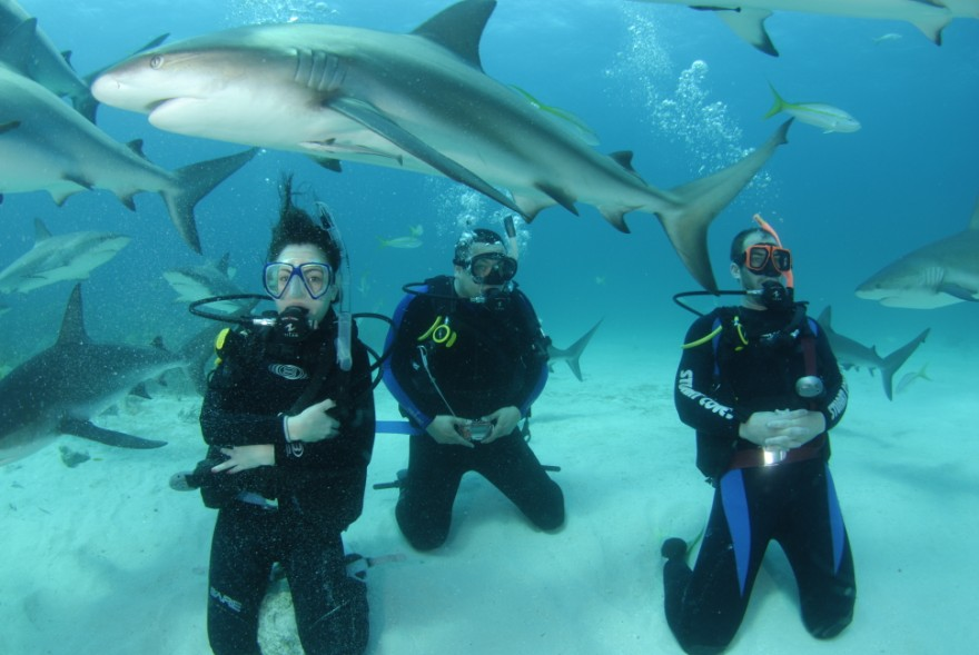 Brave souls shark diving in Nassau. Image credit not found. TravelSeeLove does not claim any rights to this image whatsoever.