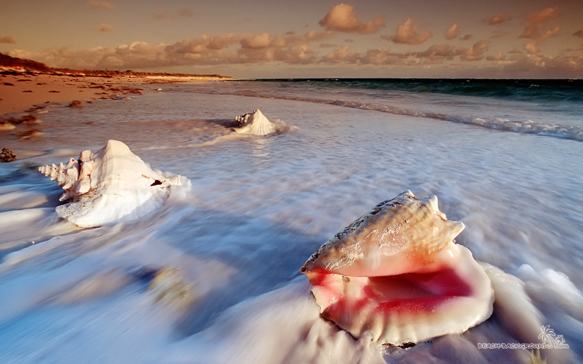 Conch shells at Cat Island. Exumas beach. Image credit not found. TravelSeeLove does not claim any rights to this image whatsoever.